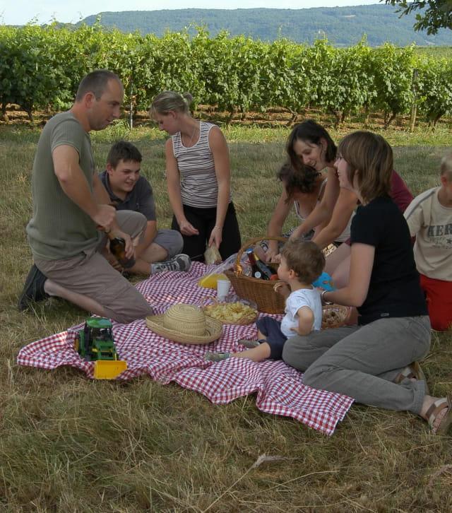 Pique-nique en famille au milieu des vignes, près d'Arbois