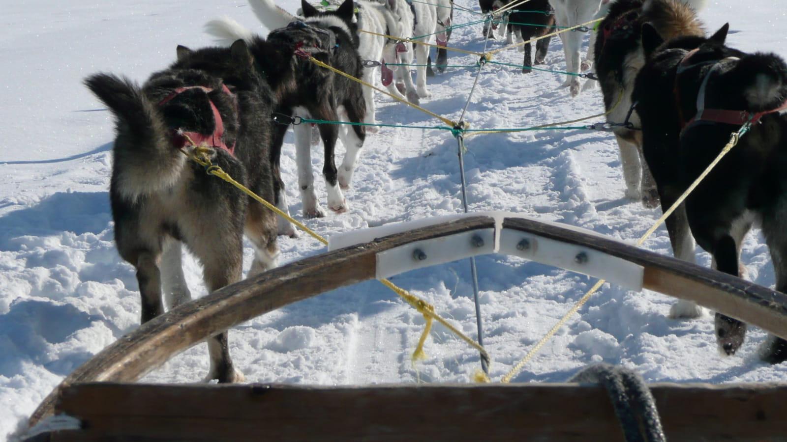 Balade en chiens de traîneaux à Métabief