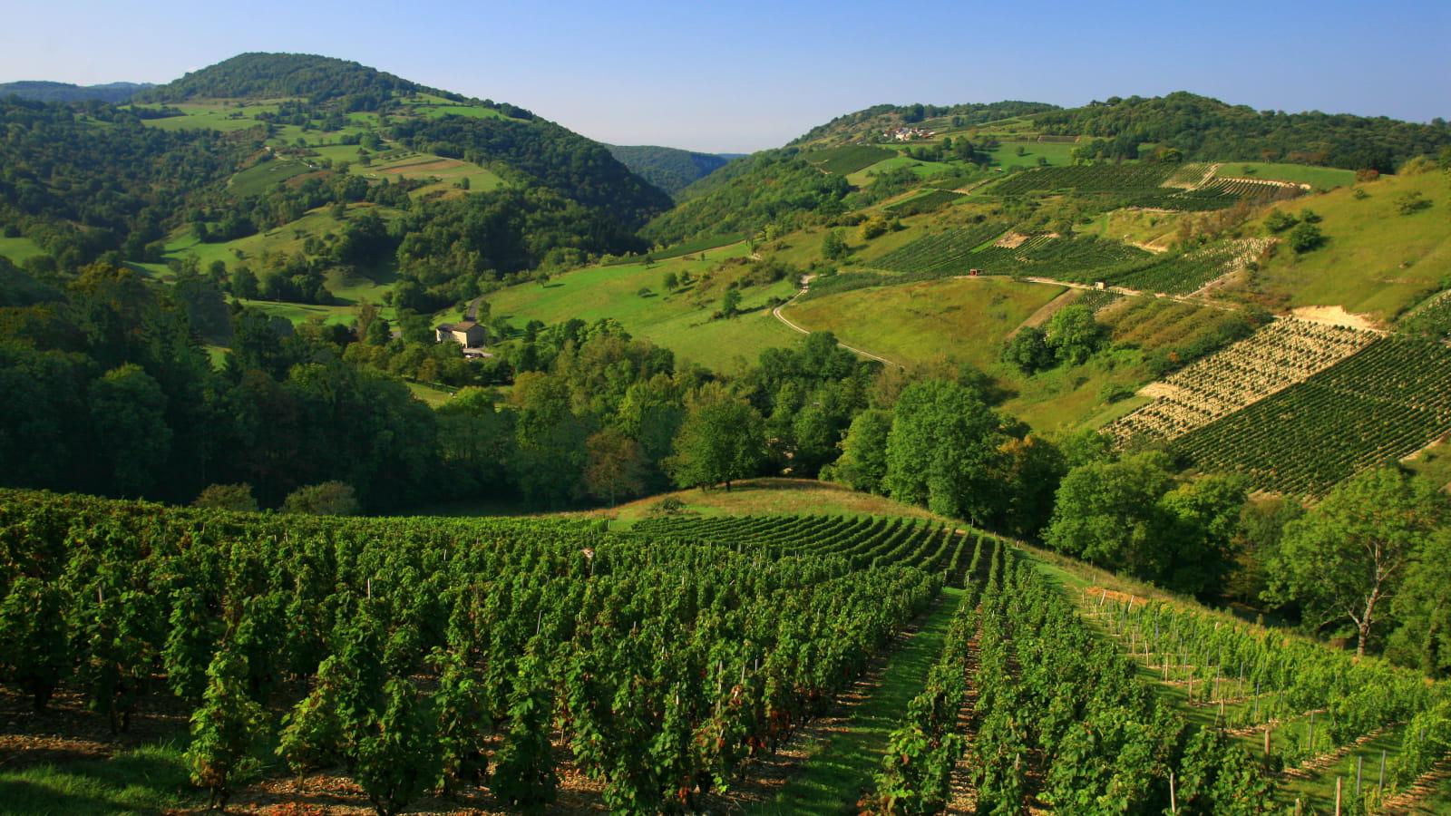 Col de Montratier - Vignoble du Bugey