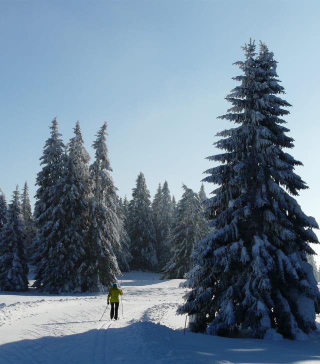 Découverte des paysages du massif du Jura à ski de fond