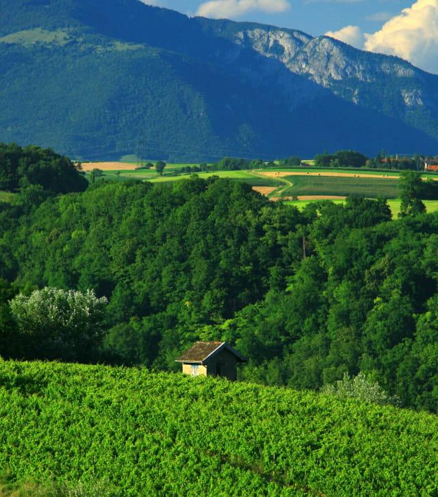 Route des vins du Bugey